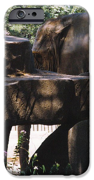 Elephants iPhone Cases - Elephant in Camouflage iPhone Case by Kathy Kavanagh
