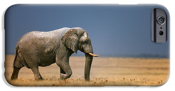 Elephants iPhone Cases - Elephant in grassfield iPhone Case by Johan Swanepoel