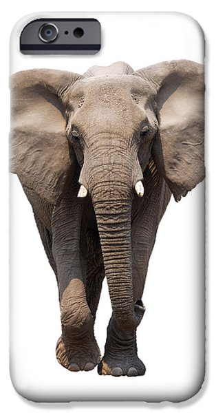 Safari iPhone Cases - Elephant isolated iPhone Case by Johan Swanepoel
