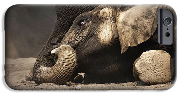 Ground iPhone Cases - Elephant - lying down iPhone Case by Johan Swanepoel
