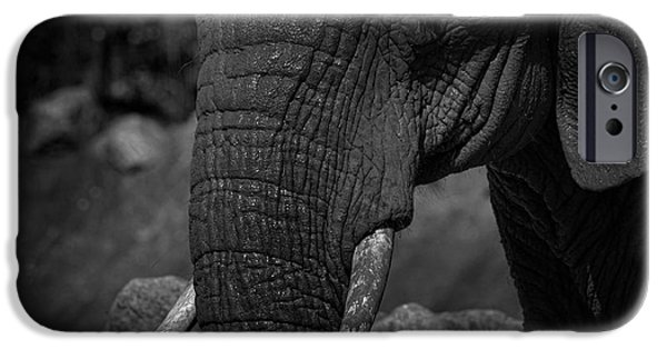 Elephants iPhone Cases - Elephant iPhone Case by Martin Newman