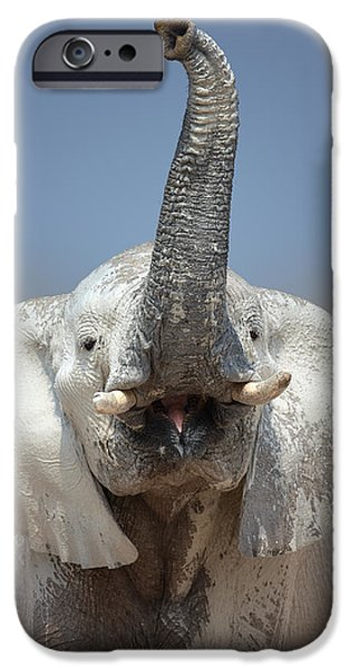 Elephant portrait iPhone Case by Johan Swanepoel