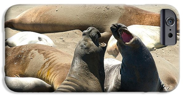 Famous Highway 1 In California iPhone Cases - Elephant Seal Birthing Grounds Two Elephant Seal Bulls Fighting iPhone Case by Artist and Photographer Laura Wrede