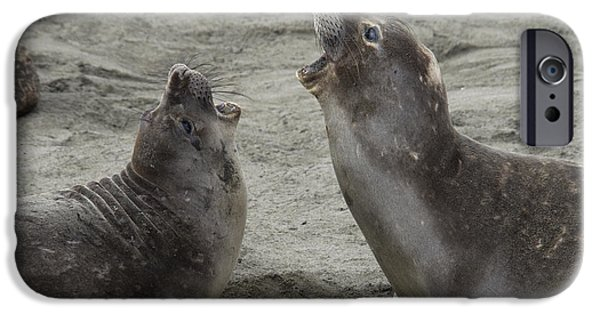 Ocean Mammals iPhone Cases - Elephant Seal Confrontation iPhone Case by Mark Newman