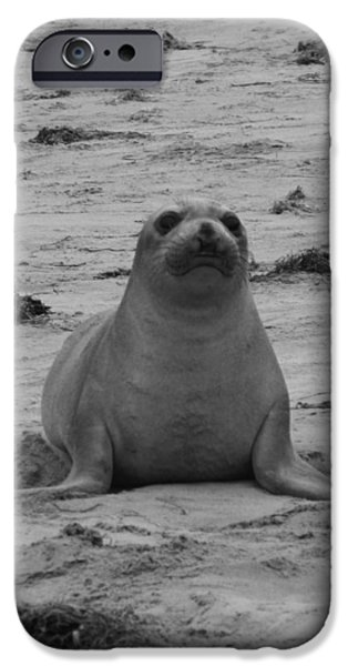 Ano Nuevo iPhone Cases - Elephant Seal iPhone Case by Gwendolyn Barnhart