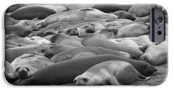 Ano Nuevo iPhone Cases - Elephant Seal Sea iPhone Case by Gwendolyn Barnhart