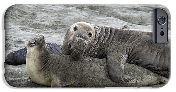 Ocean Mammals iPhone Cases - Elephant Seals Mating iPhone Case by Mark Newman