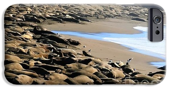 Sand Castles iPhone Cases - Elephant Seals - San Simeon CA iPhone Case by Tap  On Photo