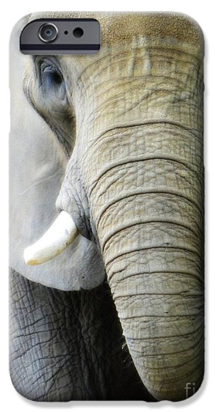 Elephants iPhone Cases - Elephant iPhone Case by Stormy Dreamin Photography