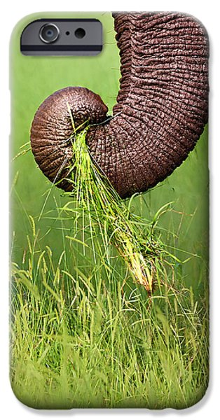 Close-up iPhone Cases - Elephant trunk pulling grass iPhone Case by Johan Swanepoel