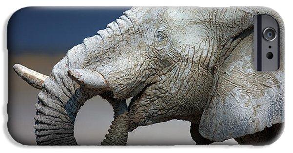 Wild Animals iPhone Cases - Elephant - white mud - Etosha salt pans iPhone Case by Johan Swanepoel