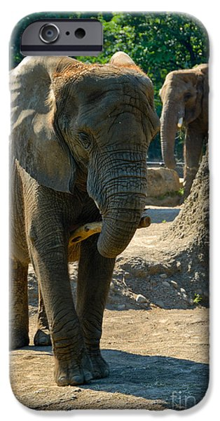 Elephants iPhone Cases - Elephants at Pittsburgh Zoo iPhone Case by Amy Cicconi