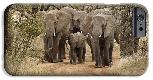 Elephant iPhone Cases - Elephants Have the Right of Way iPhone Case by Michele Burgess