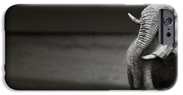 Elephants Photographs iPhone Cases - Elephants interacting iPhone Case by Johan Swanepoel