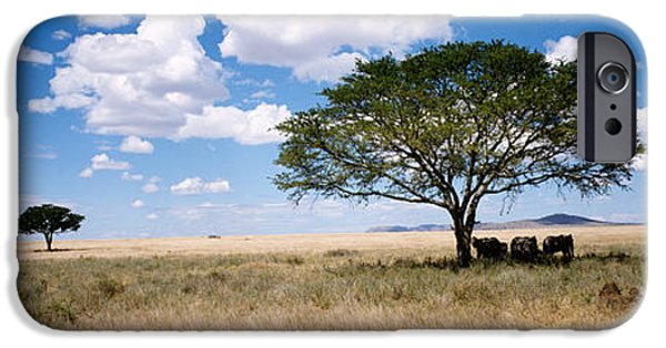 Elephants iPhone Cases - Elephants, Kenya, Africa iPhone Case by Panoramic Images