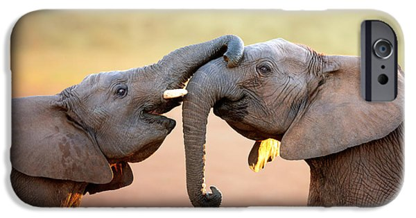 Elephants Photographs iPhone Cases - Elephants touching each other iPhone Case by Johan Swanepoel