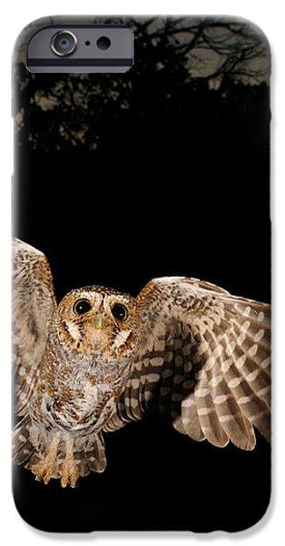 Elf Owl iPhone Case by Scott Linstead