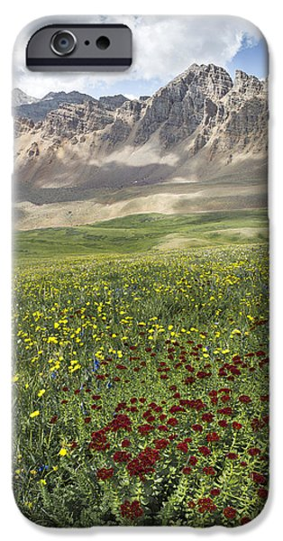 Cathedral Rock Pyrography iPhone Cases - Elk Mountain Wildflowers iPhone Case by Aaron Spong