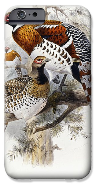 Ornithology iPhone Cases - Elliots Pheasant iPhone Case by Joseph Wolf