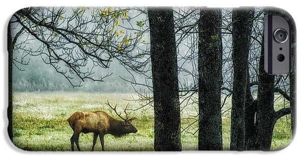 Arkansas iPhone Cases - Emerging from the Fog iPhone Case by Priscilla Burgers