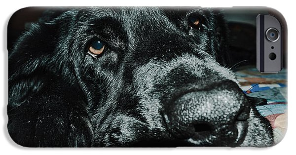 Black Dog iPhone Cases - Emma  iPhone Case by Melissa Coffield