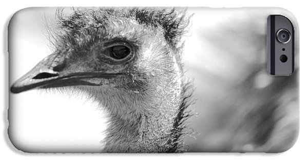 Emu iPhone Cases - Emu - Black and White iPhone Case by Carol Groenen