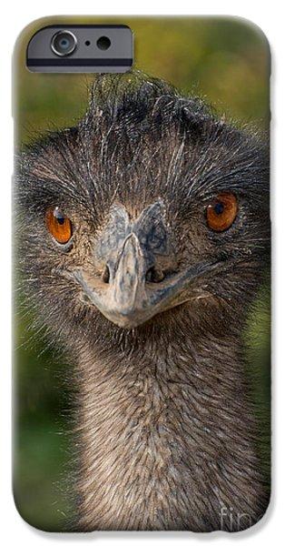 Emu iPhone Cases - Emu Portrait iPhone Case by Anthony Mercieca