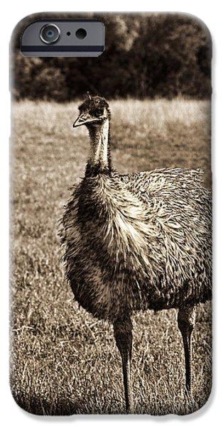 Emu iPhone Cases - Emu-Sepia iPhone Case by Douglas Barnard