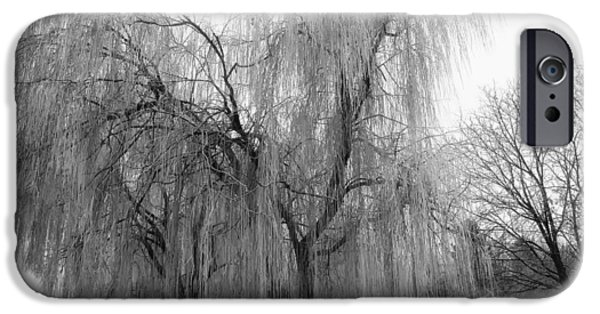 Weeping Willow Tree iPhone Cases - Encased in Ice iPhone Case by Mountain Dreams