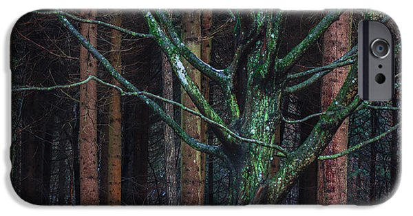Forest iPhone Cases - Enchanted forest iPhone Case by Davorin Mance