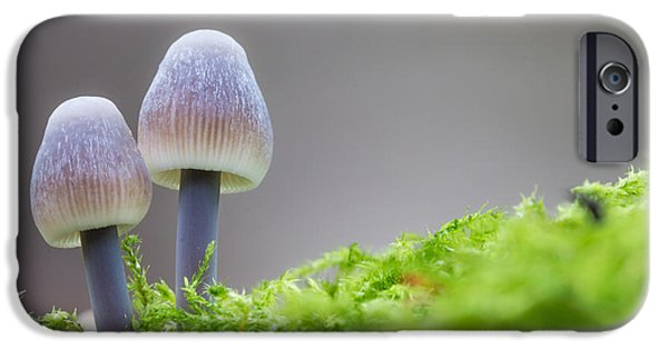 Mushrooms iPhone Cases - Enchanted Fungi iPhone Case by Ian Hufton