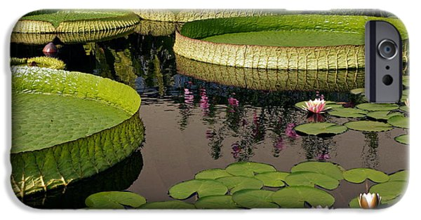 Victoria Cruziana iPhone Cases - Enchanting Water Garden iPhone Case by Byron Varvarigos