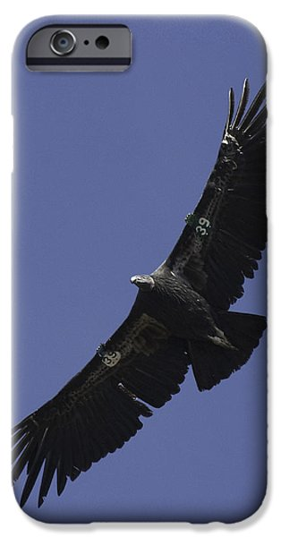 Endangered California Condor iPhone Case by Ram Vasudev