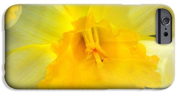 Floral Digital Art Digital Art iPhone Cases - Endless Yellow Daffodil iPhone Case by Judy Palkimas
