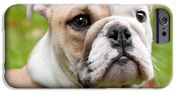 Cute Puppy Pictures Digital Art iPhone Cases - English Bulldog Puppy iPhone Case by Natalie Kinnear
