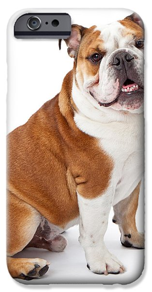 English Bulldog Sitting  iPhone Case by Susan  Schmitz