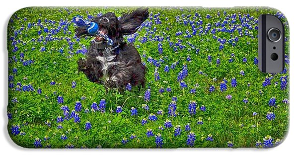 Dog And Wildflowers iPhone Cases - English Cocker Spaniel Fetches iPhone Case by Kristina Deane