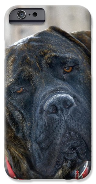 English Mastiff iPhone Cases - English Mastiff iPhone Case by Mark Newman