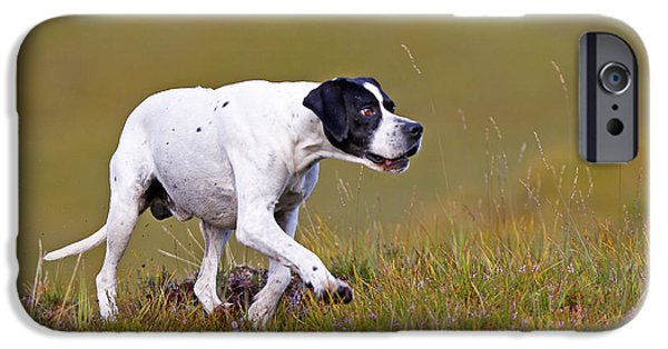 Dog Walking iPhone Cases - English Pointer iPhone Case by M. Watson