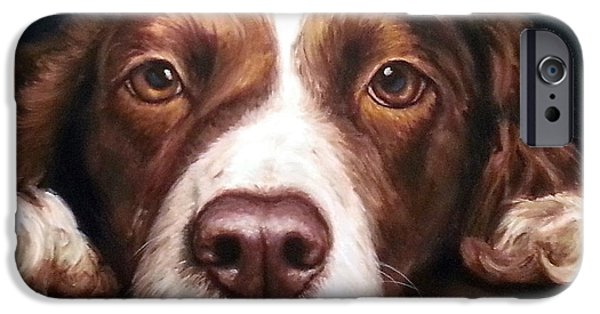 Springer Spaniel iPhone Cases - English Springer Spaniel Resting on Dark Red iPhone Case by Dottie Dracos