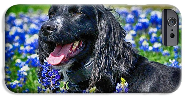 Dog And Wildflowers iPhone Cases - Enjoying Beautiful Fields iPhone Case by Kristina Deane