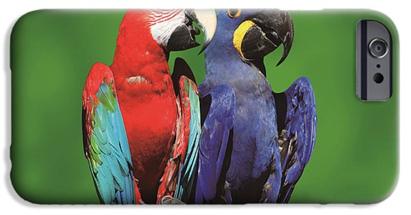Birds Reliefs iPhone Cases - Envious of loves iPhone Case by Raphael  Sanzio