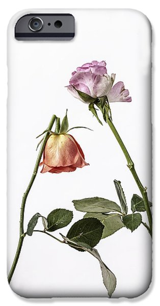Rose iPhone Cases - Ephemeral iPhone Case by Joana Kruse