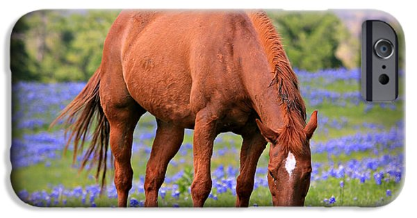 Horse iPhone Cases - Equine Bluebonnets iPhone Case by Stephen Stookey