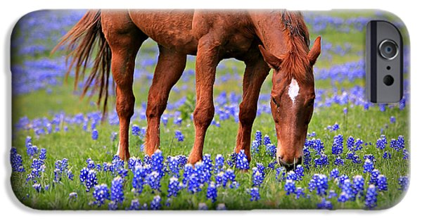 Flora iPhone Cases - Equine Bluebonnets iPhone Case by Stephen Stookey