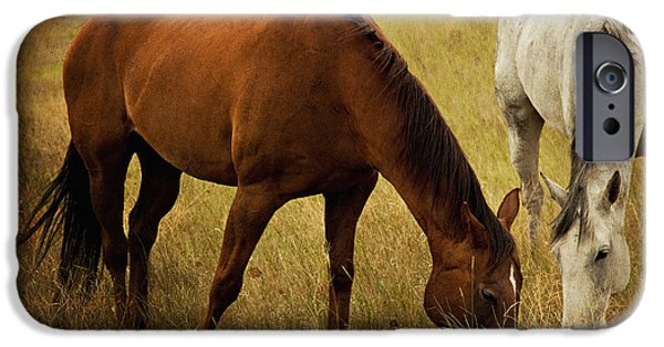 Chestnut Horse iPhone Cases - Equine Friends iPhone Case by Theresa Tahara