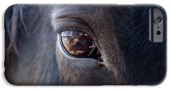 Horses iPhone Cases - Equine In Sight iPhone Case by Sheryl Cox