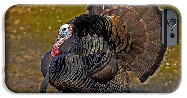 Eastern Wild Turkey iPhone Cases - Et iPhone Case by Jack Milchanowski