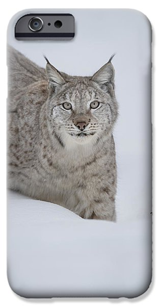 Eurasian Lynx iPhone Case by Andy Astbury