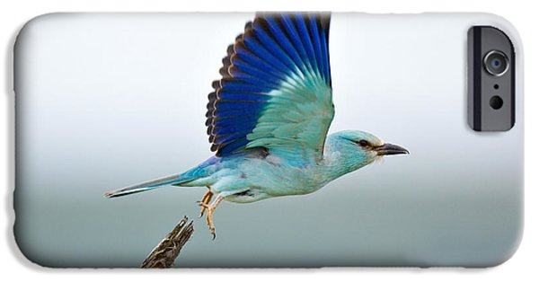 Flight Photographs iPhone Cases - Eurasian Roller iPhone Case by Johan Swanepoel